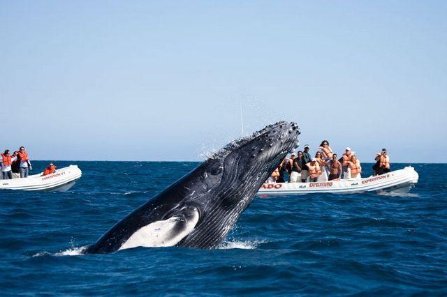 Наблюдение за китами и дельфинами на Азорских островах